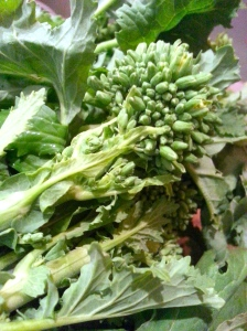 broccoli rabe floret