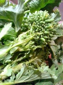 broccoli rabe floret